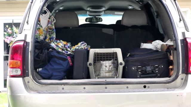 bagaj ve kedi uzun yolculuk için ile sandık tan suv crammed - kafes sınırlı alan stok videoları ve detay görüntü çekimi