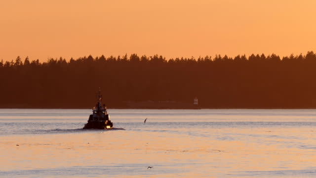 Tugboat In Amazing Evening Lighting video