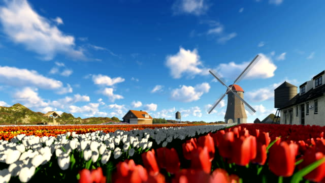 Tulip field near mountain and old wind mill running Tulip field near mountain and old wind mill running tulip stock videos & royalty-free footage