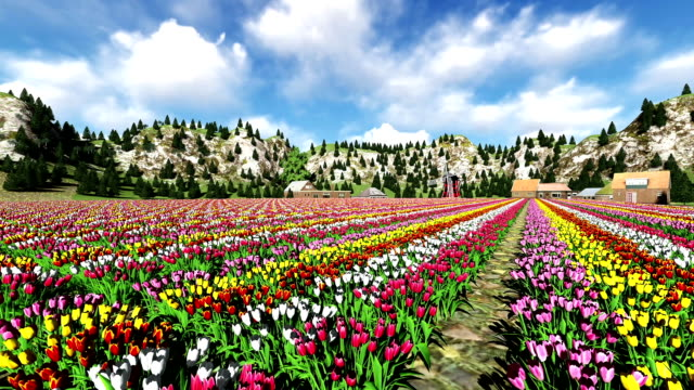 Tulips Field With An Old Windmill Power Station Tulips Field With An Old Windmill Power Station tulip stock videos & royalty-free footage
