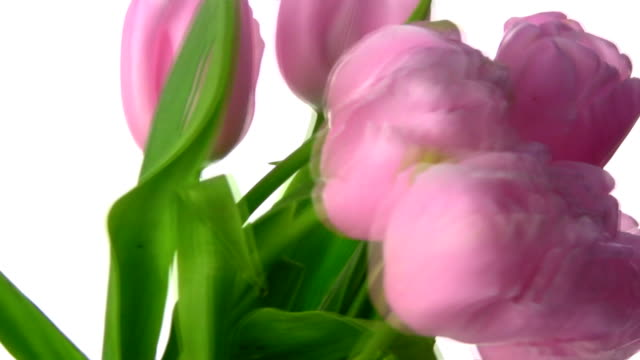Tulips rotate