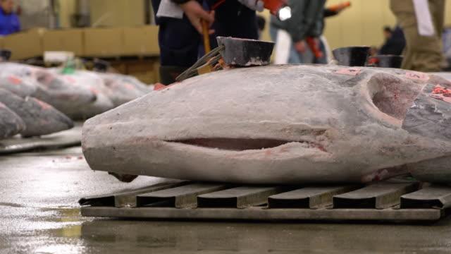 Tuna auction at Tsukiji Fish market in Tokyo Japan Tuna auction at Tsukiji Fish market in Tokyo Japan tuna seafood stock videos & royalty-free footage