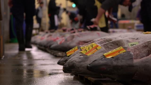 Tuna auction at Tsukiji Fish market in Tokyo Japan video