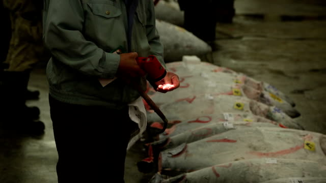 Tuna Auction in Japan.  Buyers inspecting tuna at the morning auction This high definition shows frozen tuna and the various buyers inspecting tuna at the morning auction. tuna seafood stock videos & royalty-free footage