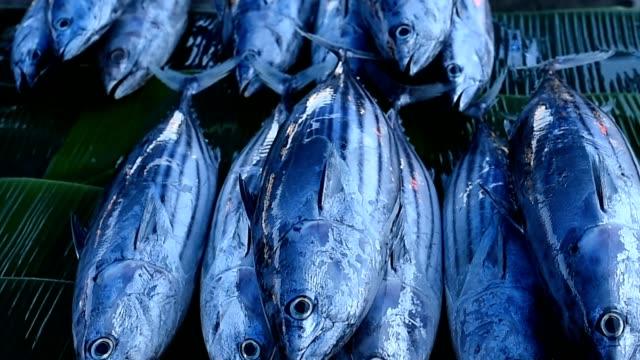 Tuna Fresh in Fish Market Tuna Fresh in Fish Market tuna seafood stock videos & royalty-free footage