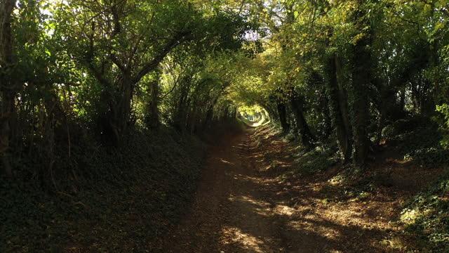 tunnel di alberi in autunno, halnaker, west sussex - sussex occidentale video stock e b–roll