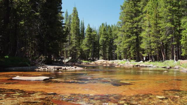 Tuolumne River in Yosemite National Park video