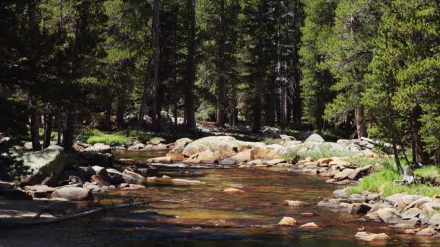 Tuolumne River Winding Through Forest video