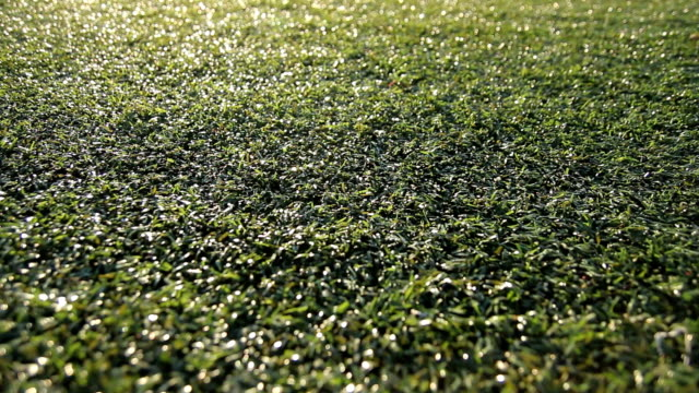 Turf Grass Dolly video