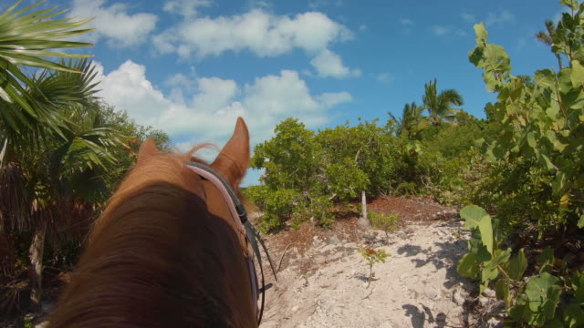 stockvideo's en b-roll-footage met turks en caicos horseback tour stunning white sand beach - providenciales