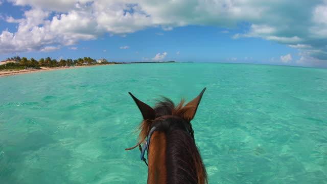 stockvideo's en b-roll-footage met turks en caicos recreatie horseback tour - providenciales