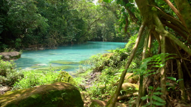 ds turquoise colored rio celeste - jungle стоковые видео и кадры b-roll