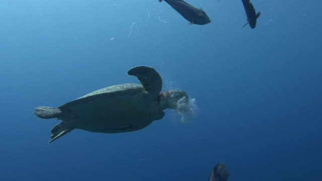 Turtle and Jellyfish video