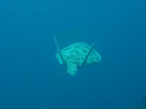 turtle tauchen unterwasser video - indochina stock-videos und b-roll-filmmaterial