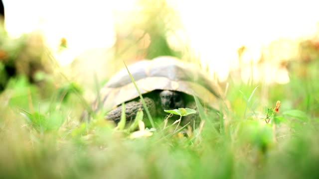 Turtle Hiding video