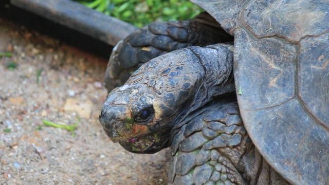 turtle is in the nature of wild animals. - żółw lądowy filmów i materiałów b-roll