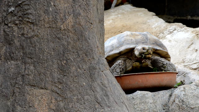 turtle is tardy turtle is tardy at nature reserve tortoise shell stock videos & royalty-free footage