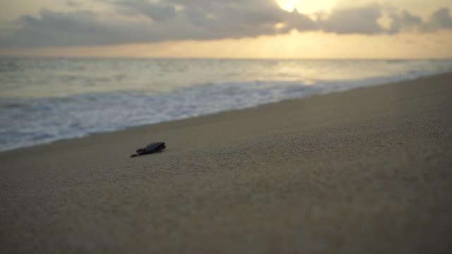 turtle sanctuary - молодое животное стоковые видео и кадры b-roll