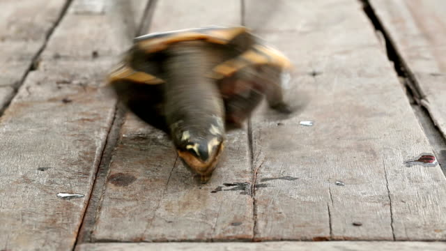 vidéos et rushes de turtle a l'envers - tortue