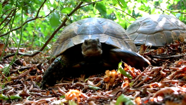 Turtle Turtles is flee away from camera tortoise shell stock videos & royalty-free footage