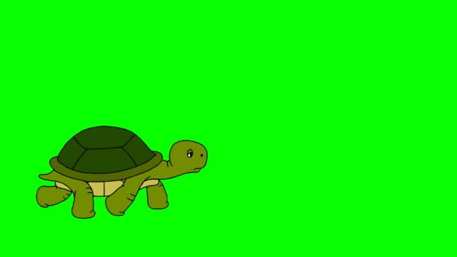 Turtle Running turtle turtle stock videos & royalty-free footage