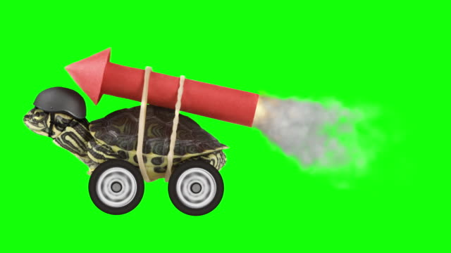 Turtle with a rocket on chroma key Turtle with a rocket tied to his back on chroma key. tortoise stock videos & royalty-free footage