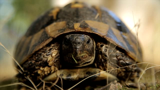 Turtle,close up Turtle,close up tortoise stock videos & royalty-free footage