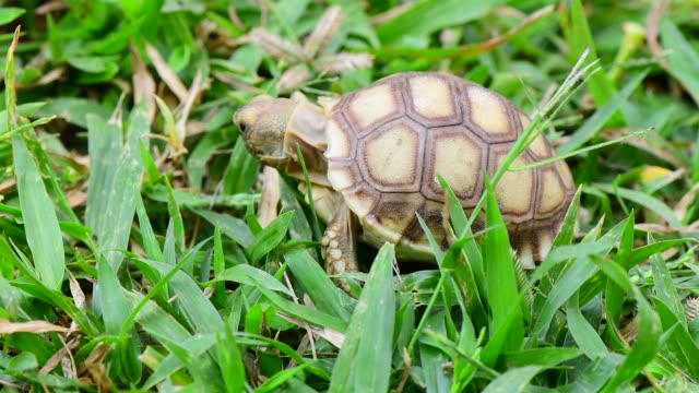 turtles in the Farm turtles in the Farm tortoise stock videos & royalty-free footage