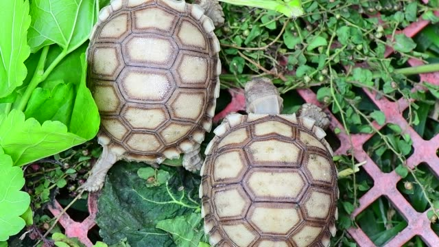 turtles in the Farm turtles in the Farm tortoise shell stock videos & royalty-free footage