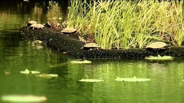 바다 바하이 연못 일본 일광욕 - 클립 길이 스톡 비디오 및 b-롤 화면