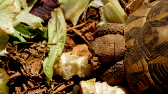 turtles turtles eating vegetables in slow-motion HD zoology stock videos & royalty-free footage