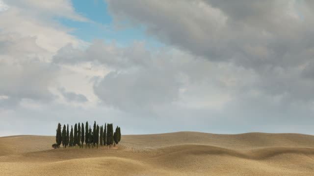 tuscan cypresses time-lapse video