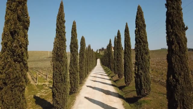 tuscany, aerial landscape of a cypress avenue near the vineyards - viale video stock e b–roll