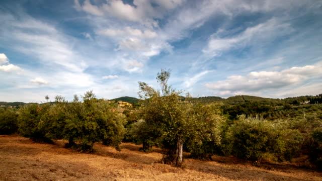 vidéos et rushes de toscane. magnifiques oliviers avec les nuages en passant dans le ciel bleu. timelapse, uhd vidéo - olivier