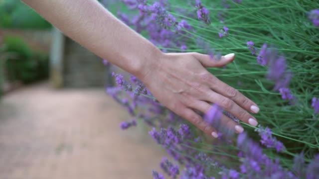 toskana, i̇talya. lavanta çiçekleri yakın çekim kız dokunur - toskana stok videoları ve detay görüntü çekimi