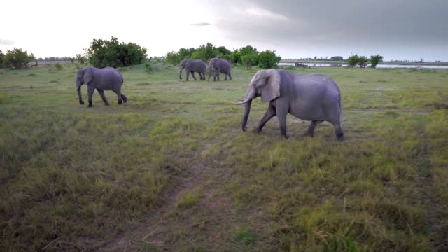 Tuskers on the march video