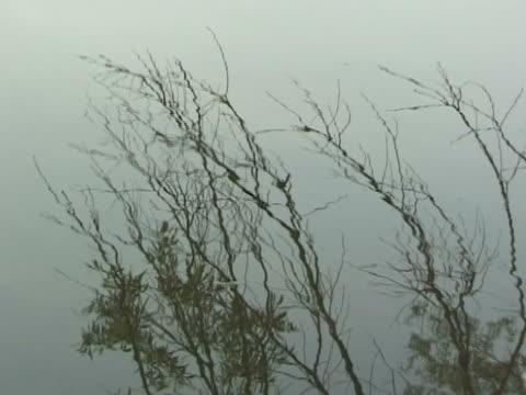 Twigs in water video