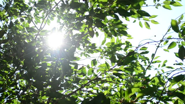Twinkling sunshine with sun rays coming through foliage video