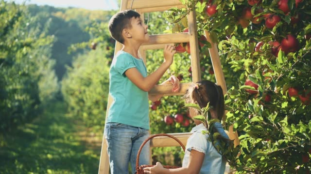 Two adorable siblings are picking apple fruits from apple tree. Copy space. 4K.