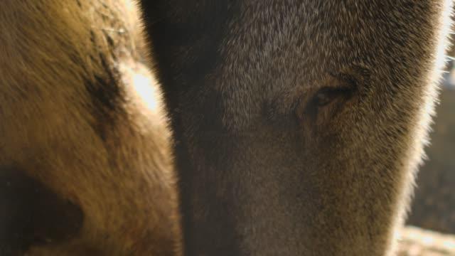 zwei ameisenbären sitzen - ameisenbär stock-videos und b-roll-filmmaterial