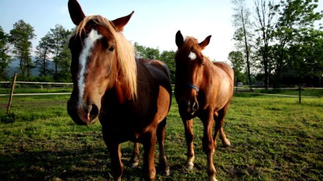 hd :美しい 2 つの馬 - 2匹点の映像素材/bロール
