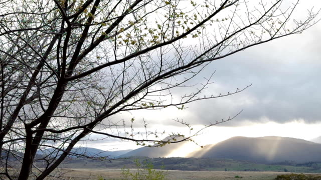 two birds flying off a tree branch with a ray of sunlight on the mountains - appollaiarsi video stock e b–roll