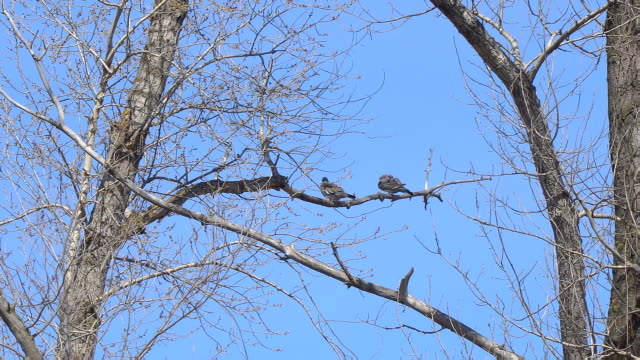 Two birds on a dry branch video