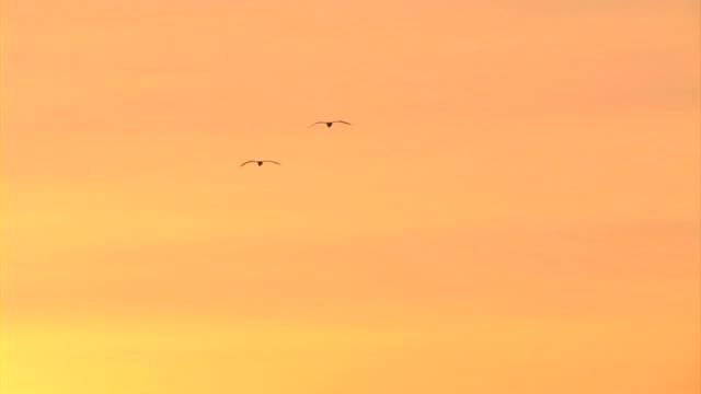 hd :2 つの鳥 - 2匹点の映像素材/bロール