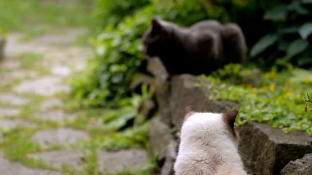 two cats in nature - gatto dal pelo corto video stock e b–roll