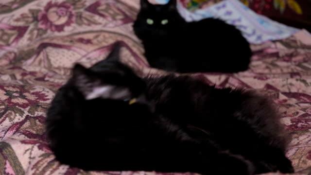 two cats lie on bed two cats lie on bed, turn to camera shorthair cat stock videos & royalty-free footage