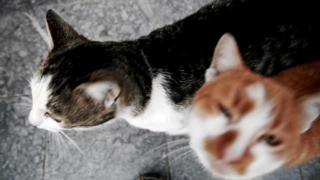 2 つの猫が - 2匹点の映像素材/bロール