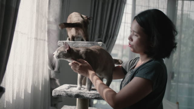Two Cats playing with Asian Young woman on a Cat house.