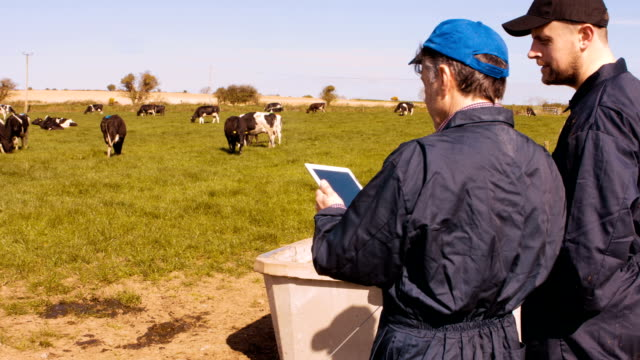 Two cattle farmers interacting with each other while using digital tablet video