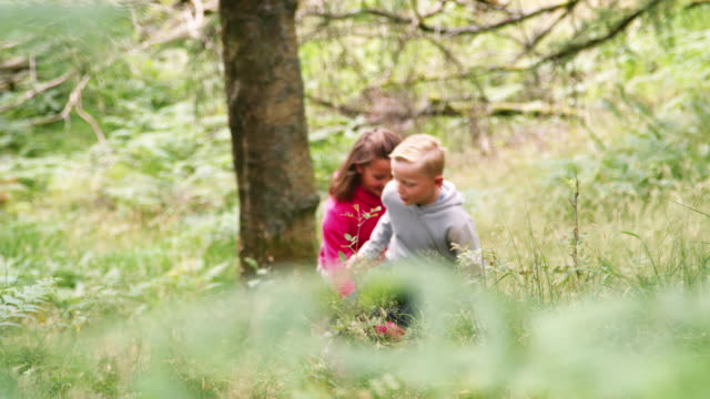 Two children walking in a forest amongst greenery, handheld, Lake District, UK Two children walking in a forest amongst greenery, handheld, Lake District, UK human relationship stock videos & royalty-free footage